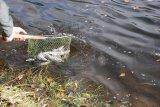 Fischbesatz 07.11.2009