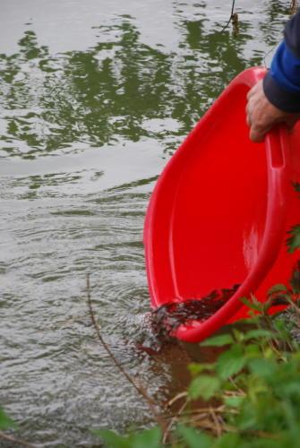 Fischbesatz 2 2008