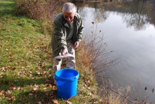 Fischbesatz 3 2008