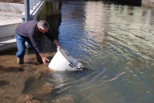 Fischbesatz 1 2009